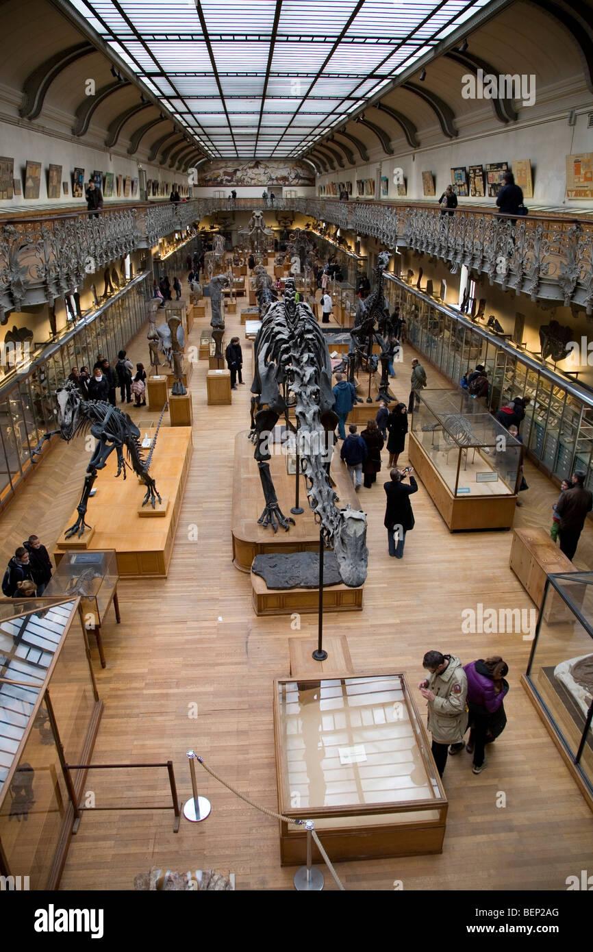Galería de Paleontología y anatomía comparada en el Museo de ...