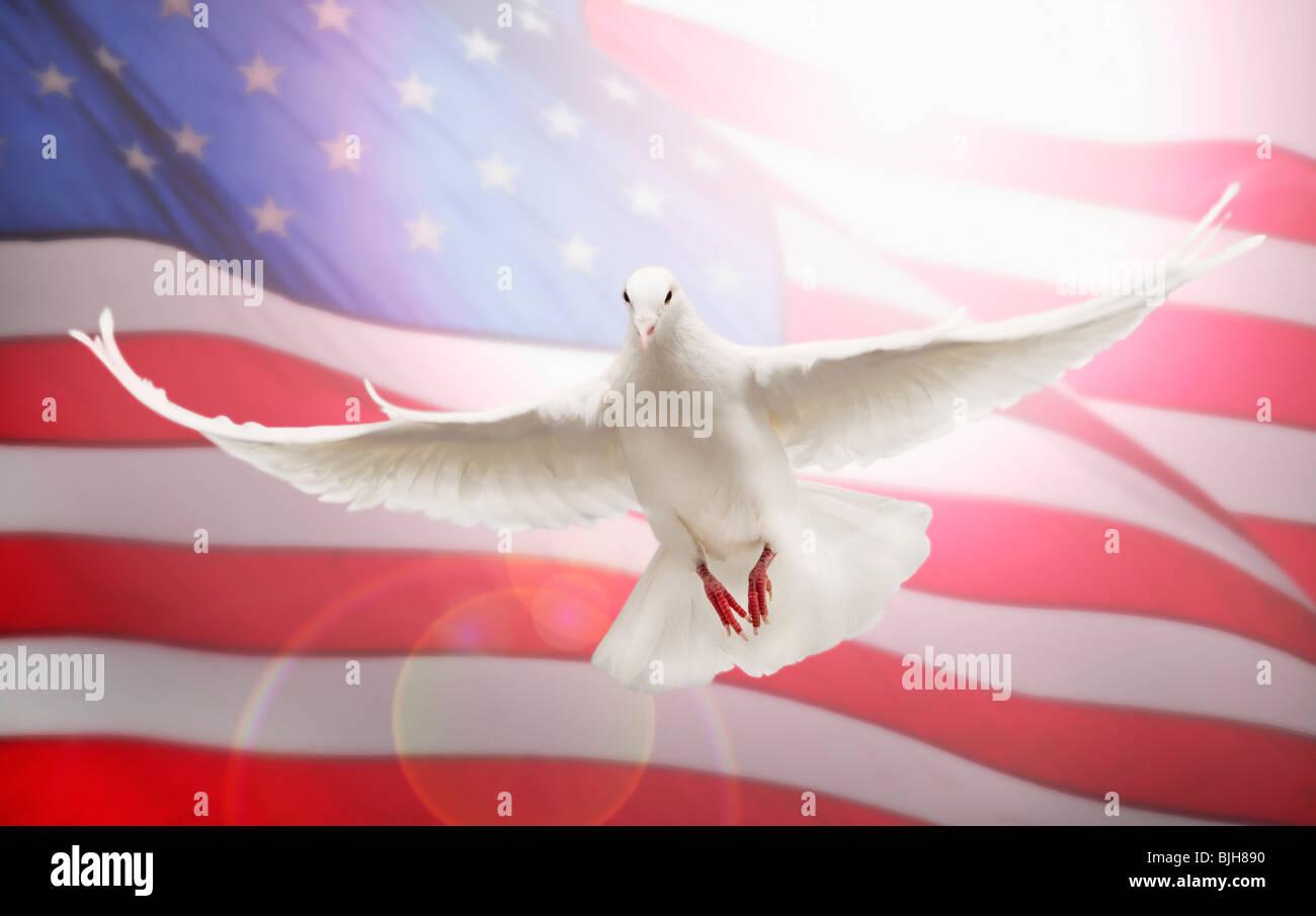 Paloma Volando En Frente De La Bandera Americana Foto Imagen De