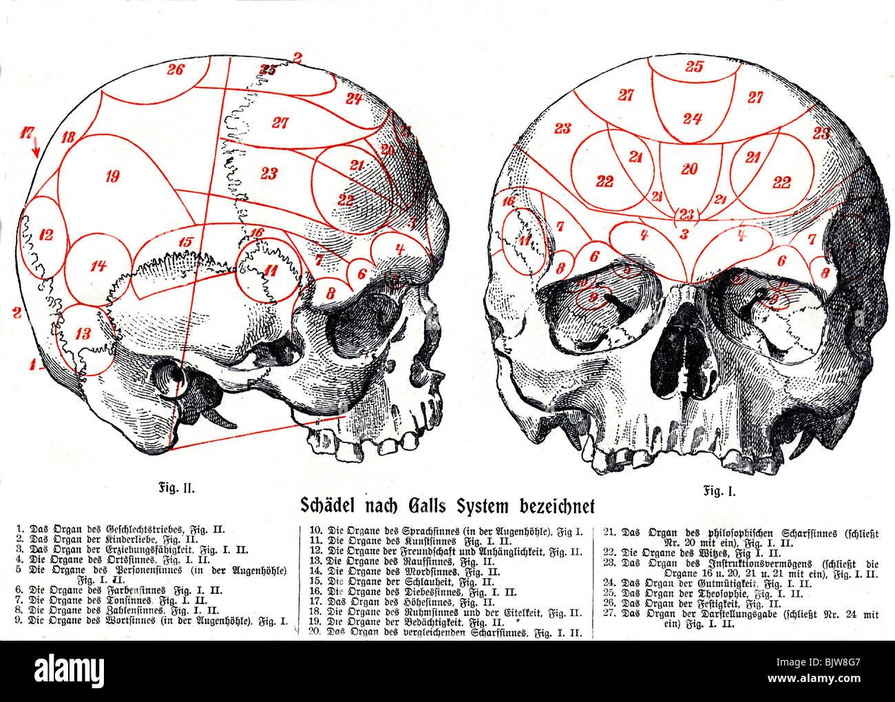 La medicina, la anatomía, el cerebro, el cráneo, la anatomía humana ...