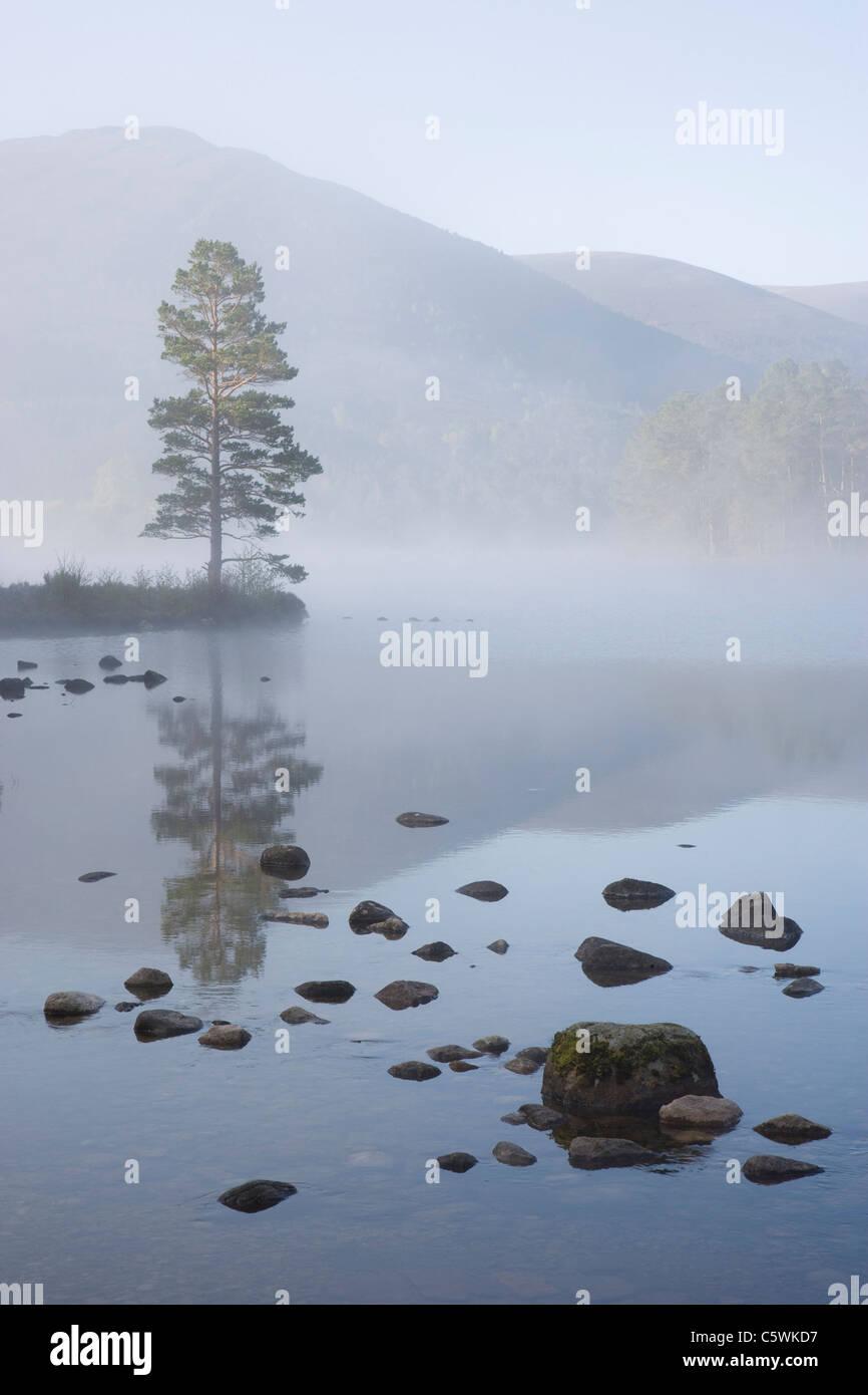 En Eilein Loch una mañana de primavera, Bosque Rothiemurchus, Parque Nacional de Cairngorms, Escocia, Gran Imagen De Stock