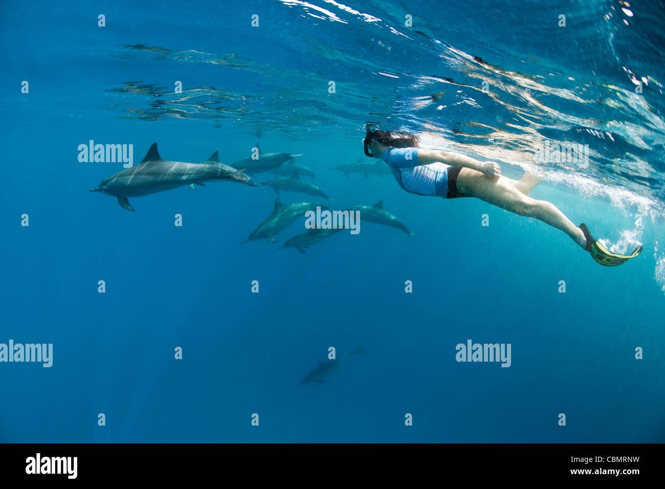Bucear con Delfines, Stenella longirostris, Shaab Rumi, Mar Rojo, Sudán Imagen De Stock
