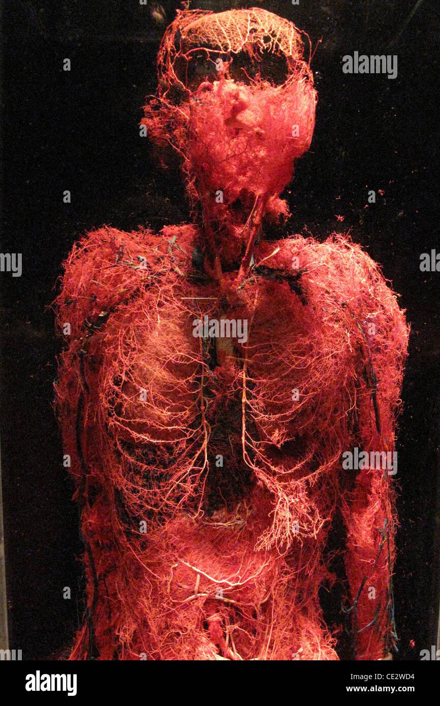 Cuerpos... La exposición \