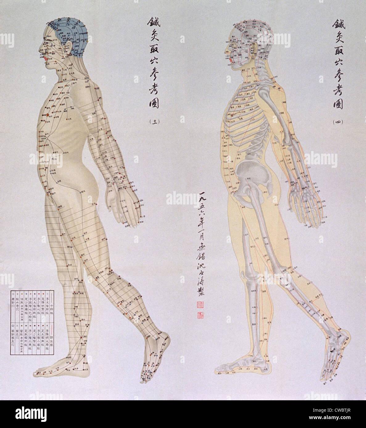 Tabla de puntos de acupuntura china en dos perfiles de un cuerpo ...