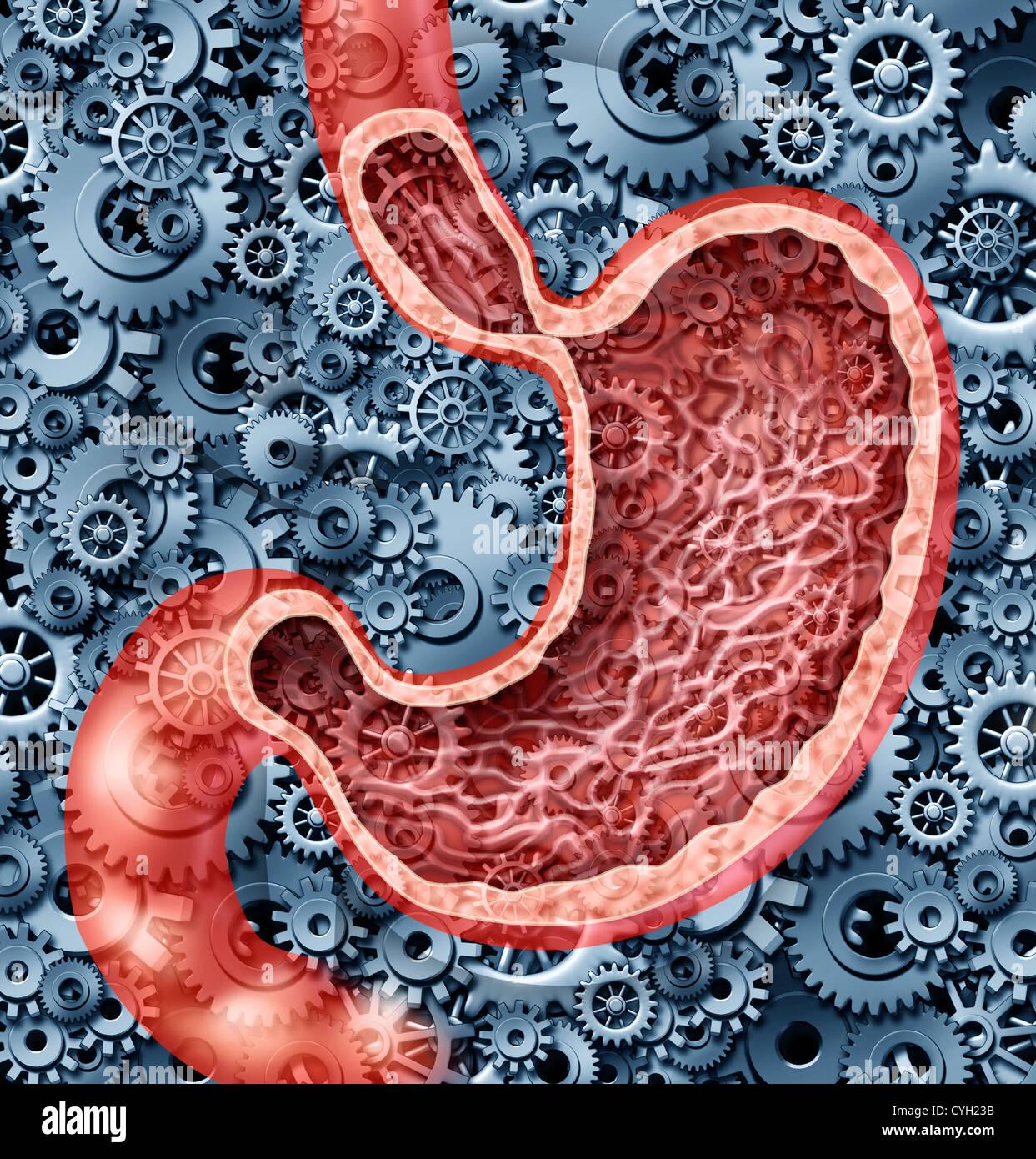 La digestión humana funciona como un estómago anatomía del órgano ...