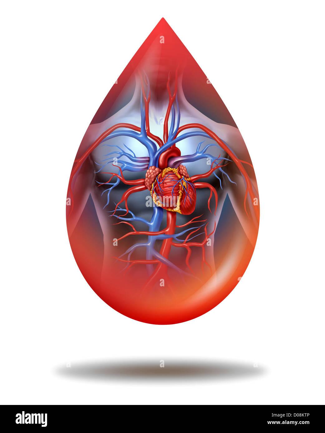 Gota de sangre del corazón humano con un cuerpo humano anatomía ...