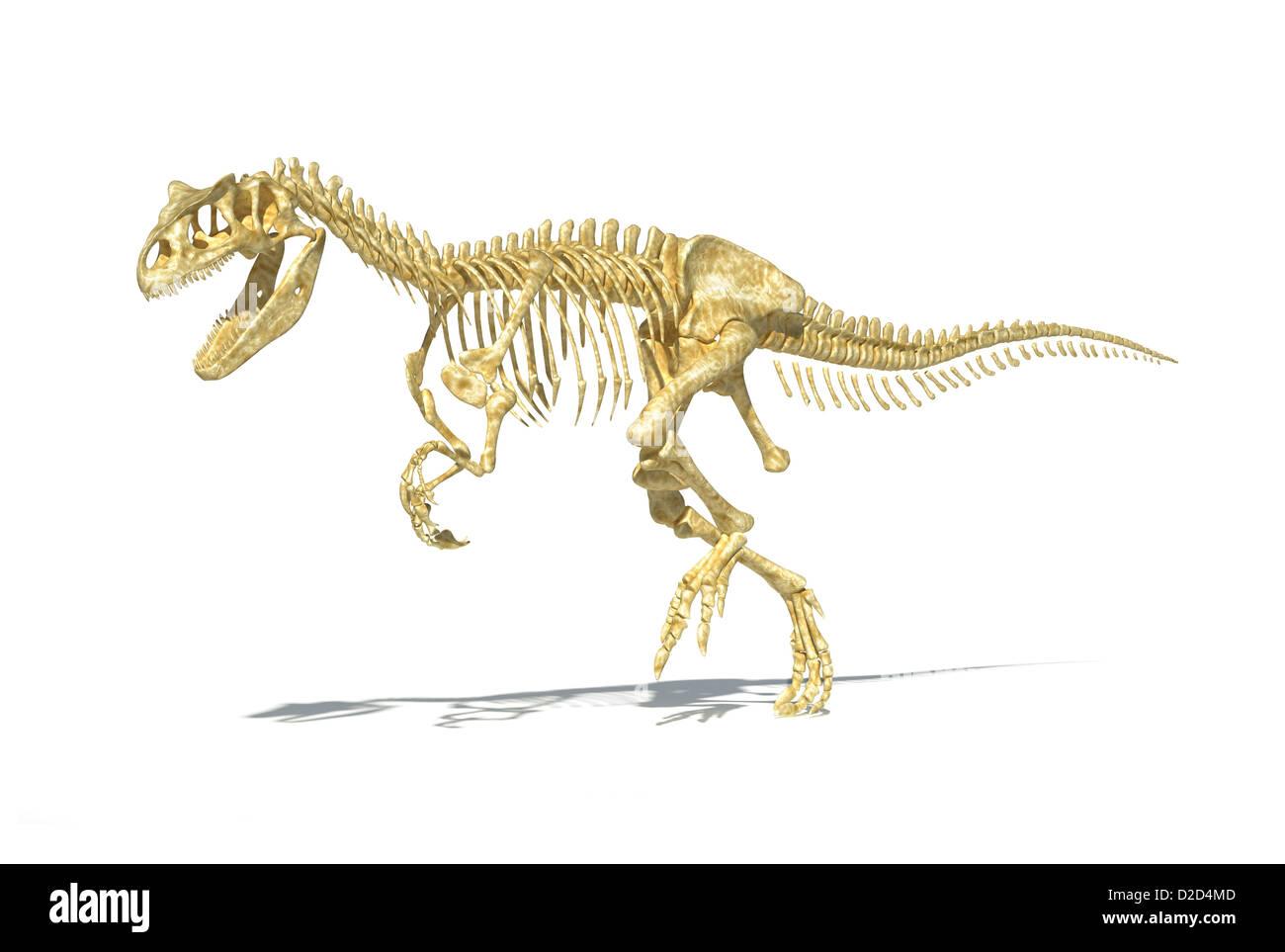 Esqueleto de dinosaurio carnívoro Allosaurs Allosaurus reptiles ...