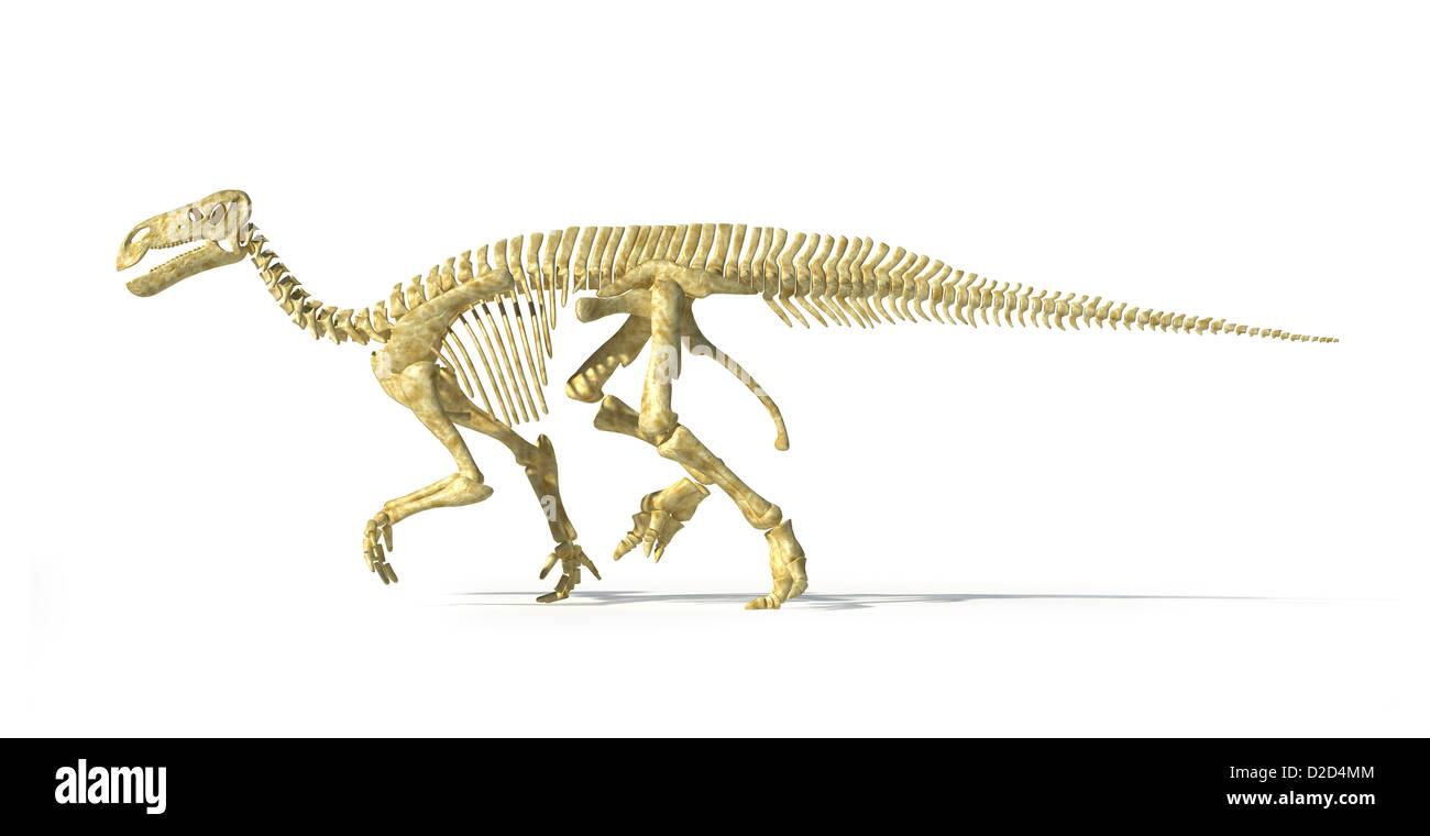 Iguanodon esqueleto de dinosaurio del período Cretácico dinosaurios ...