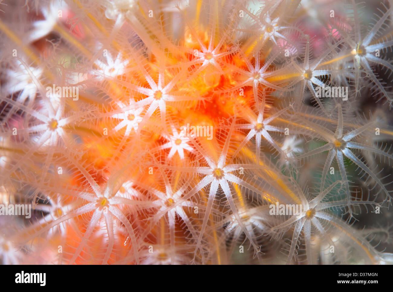 Cerca de coloridas plantas subacuáticas Imagen De Stock
