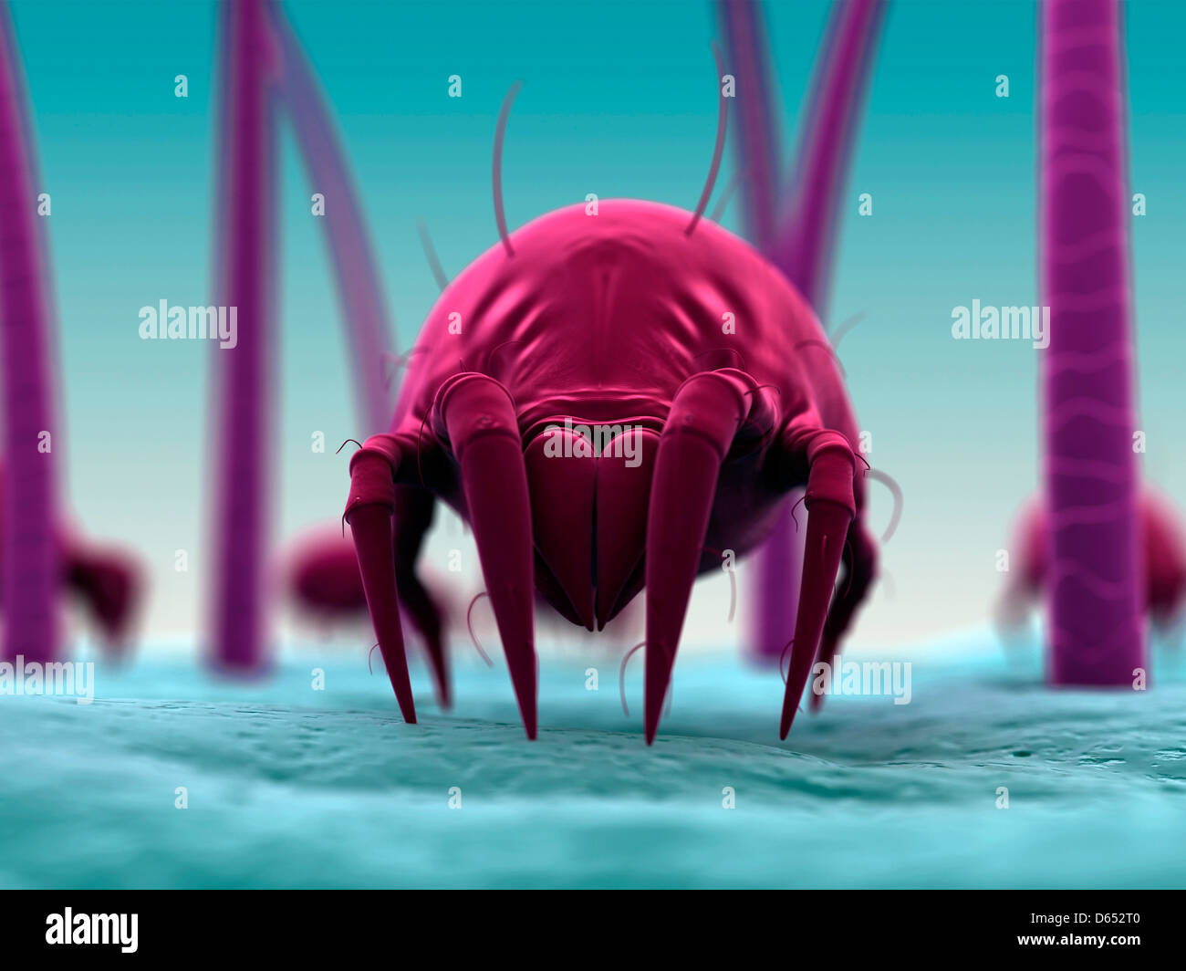 Los ácaros del polvo, las ilustraciones Imagen De Stock