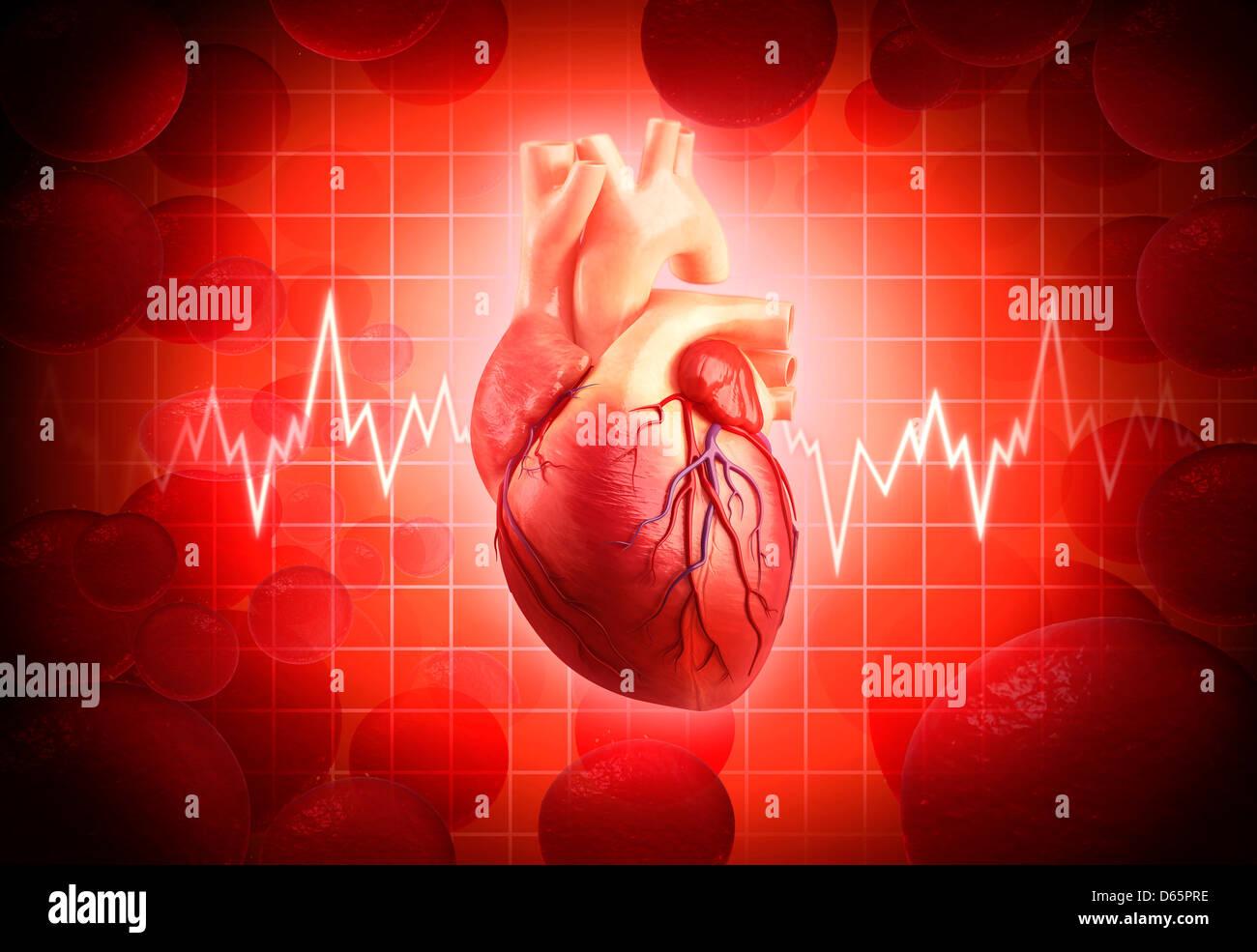 Corazón humano, obras de arte Foto & Imagen De Stock: 55446706 - Alamy