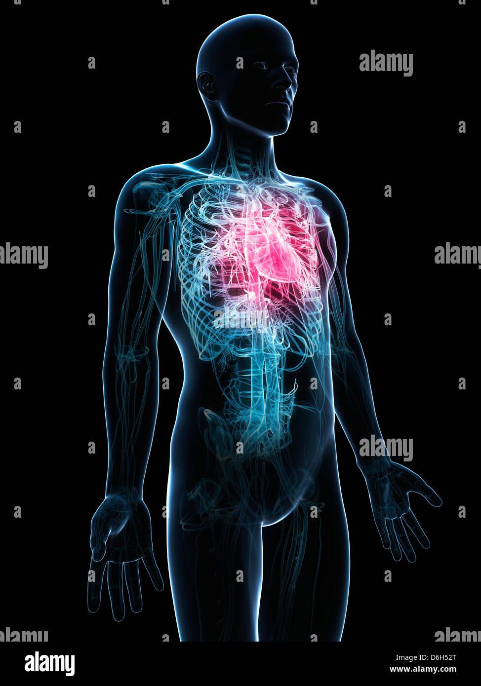 Corazón humano, obras de arte Foto & Imagen De Stock: 55696224 - Alamy