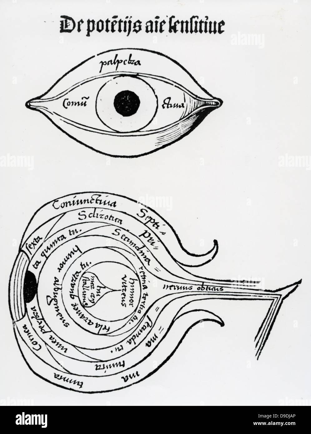 Diagrama del ojo humano. Xilografía de \'\'margarita Philosophica ...