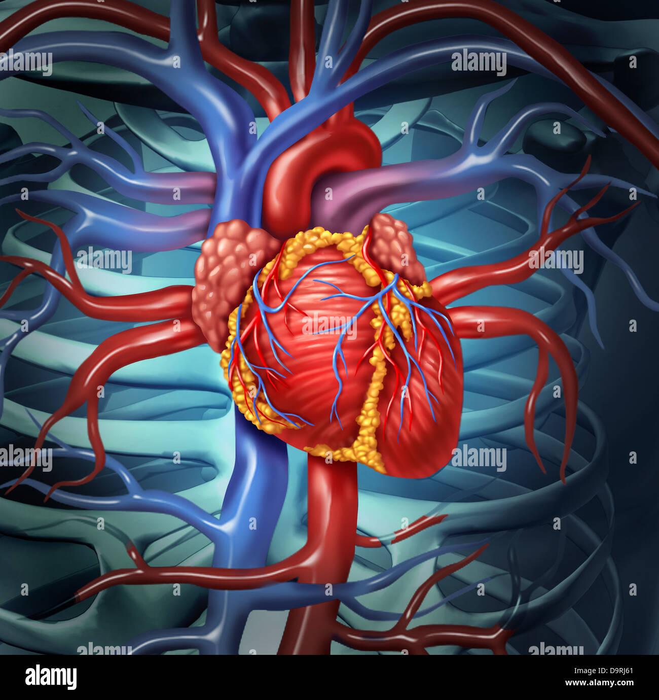 Cardiovascular anatomía del corazón humano a partir de un cuerpo ...