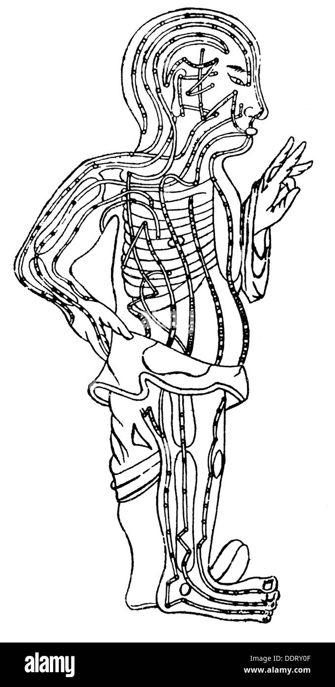 La medicina, la anatomía, la circulación de la sangre, según la ...