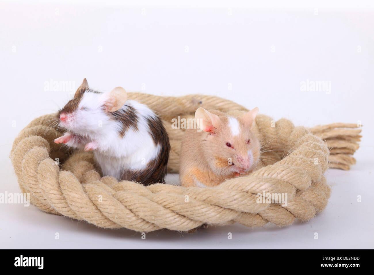 Ratones en casa best casas de muecas trampa o cepo en miniatura para ratones ratas etc para - Ratones en casa ...