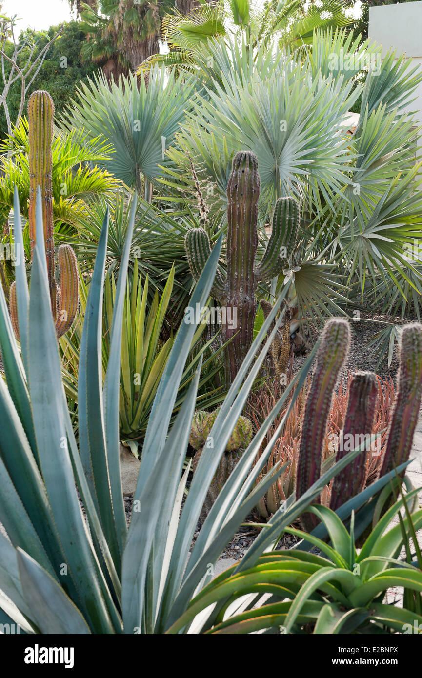 Las Plantas Resistentes A La Sequia En El Jardin De Baja Home Foto - Plantas-de-jardin-resistentes
