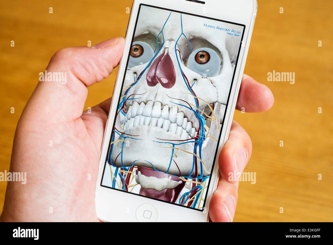 Detalle de educación médica atlas anatomía humana en 3D en un iPhone ...