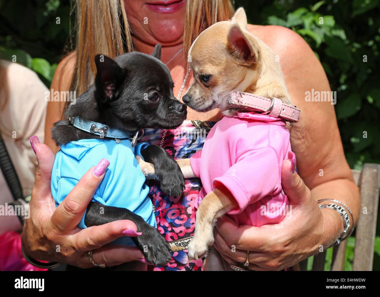 Contemporáneo Trajes De Boda Para Los Perros Reino Unido Modelo ...