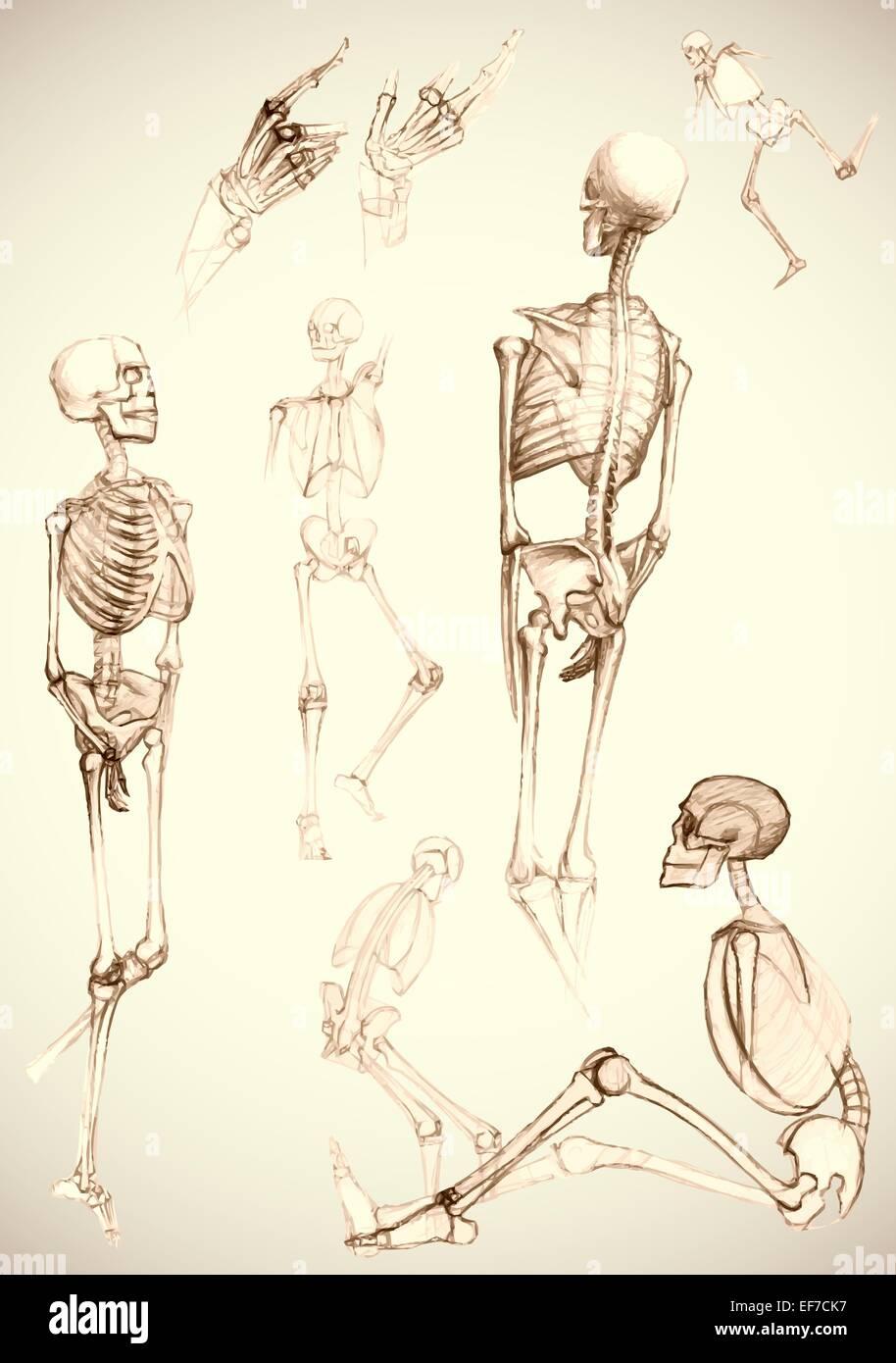 Conjunto de partes del cuerpo humano y esqueletos en diferentes ...