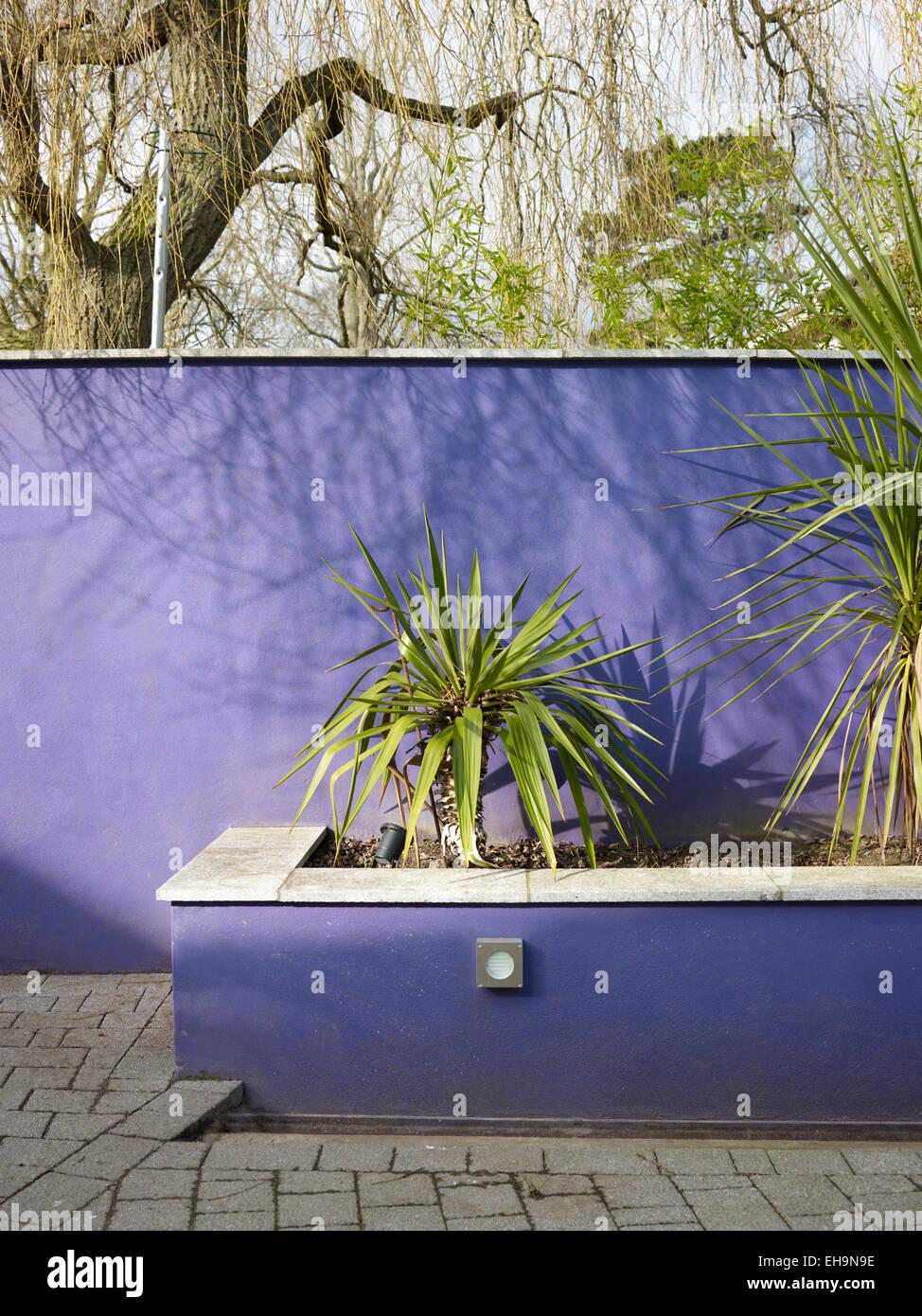 Plantas de sombra exterior helechos en su hbitat natural for Planta yuca exterior