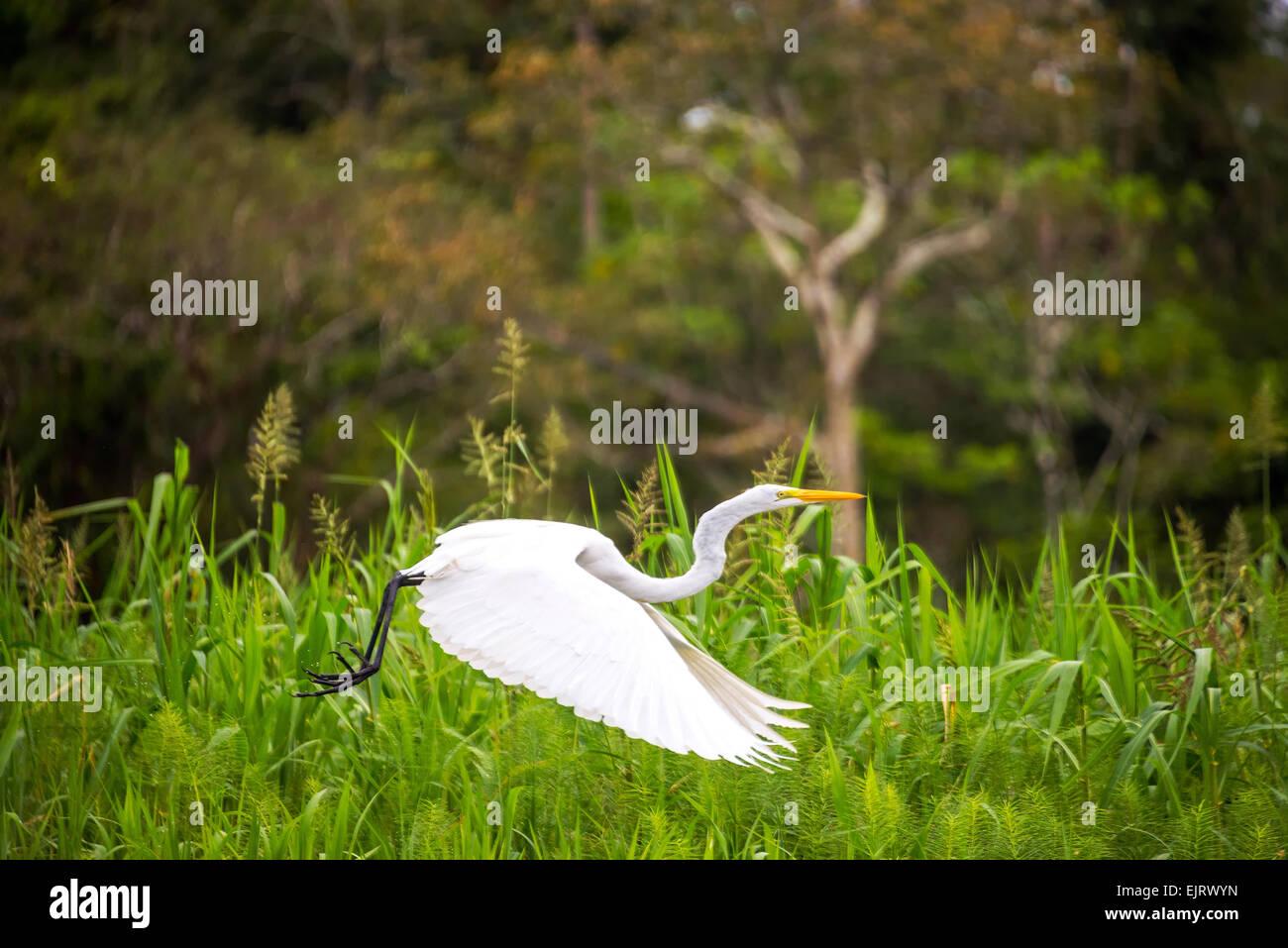 heron taking off Stock Photos & heron taking off Stock Images - Alamy