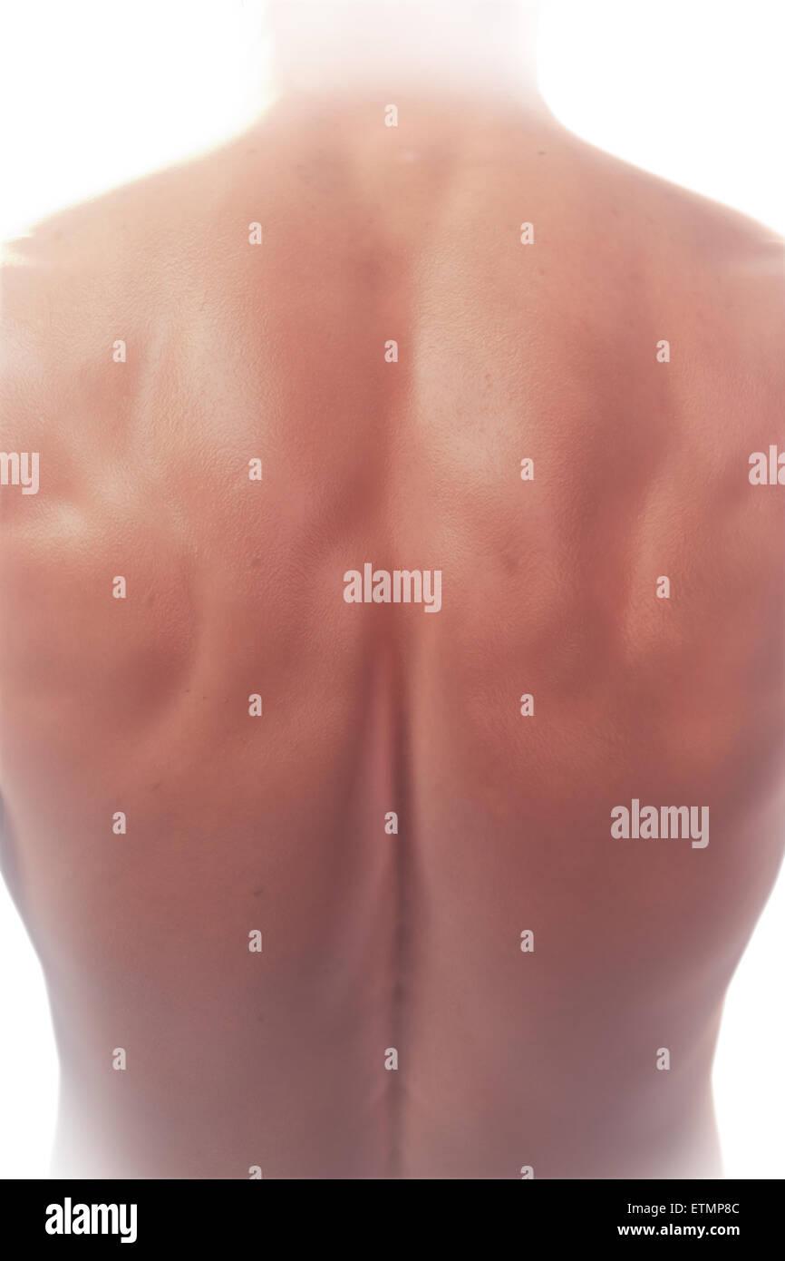 Ilustración que muestra la anatomía de la superficie de la espalda ...