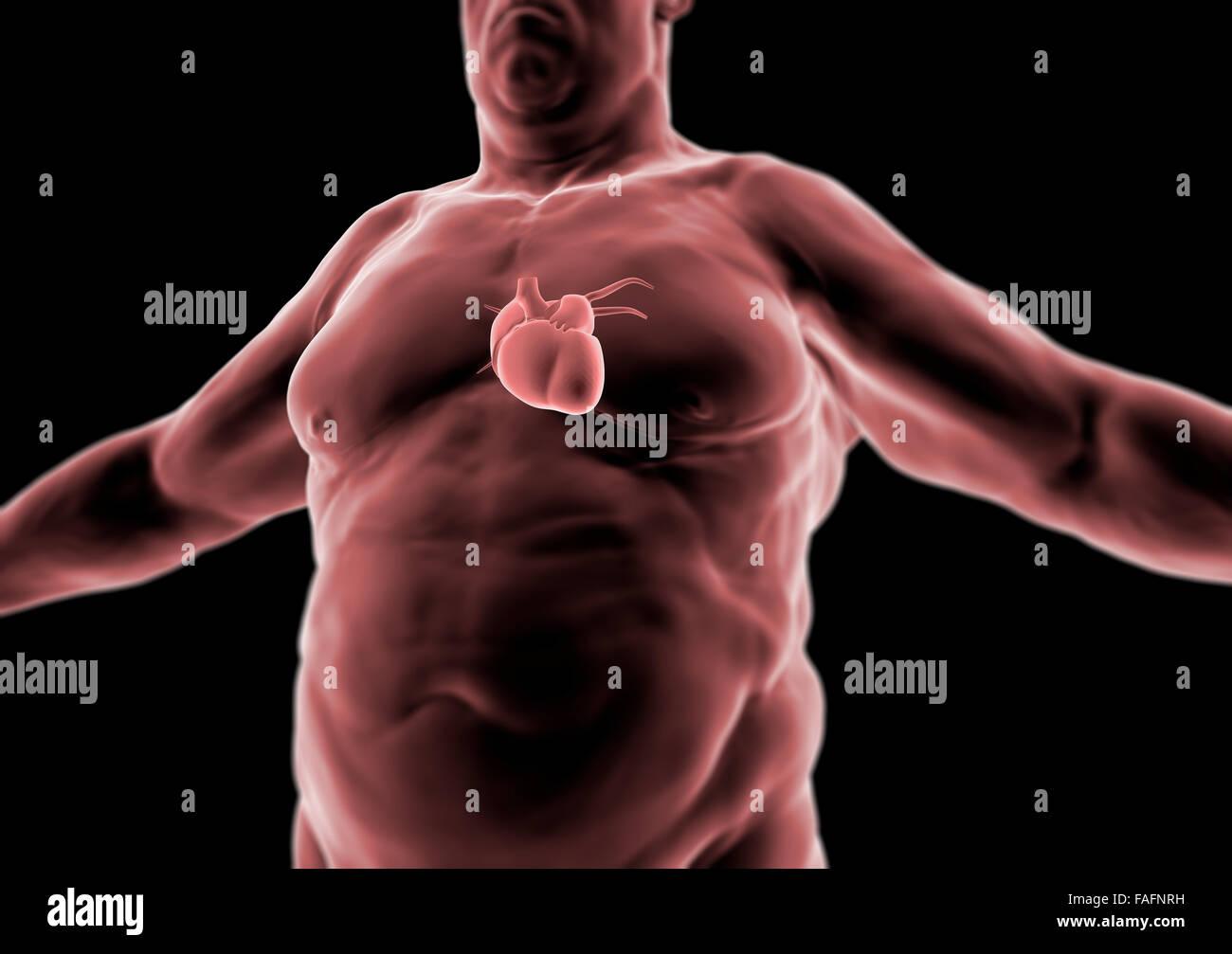 El cuerpo humano en 3D, la persona gorda, corazón y anatomía ...