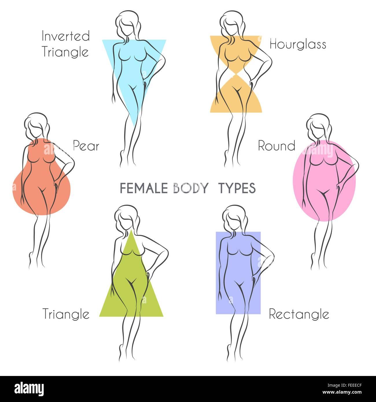 Tipos de cuerpo femenino anatomía. Mujer principal figura de forma ...