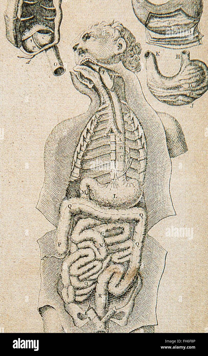 Página interior de holandés Ontleedkundige Tafelen libro \'Anatomía ...