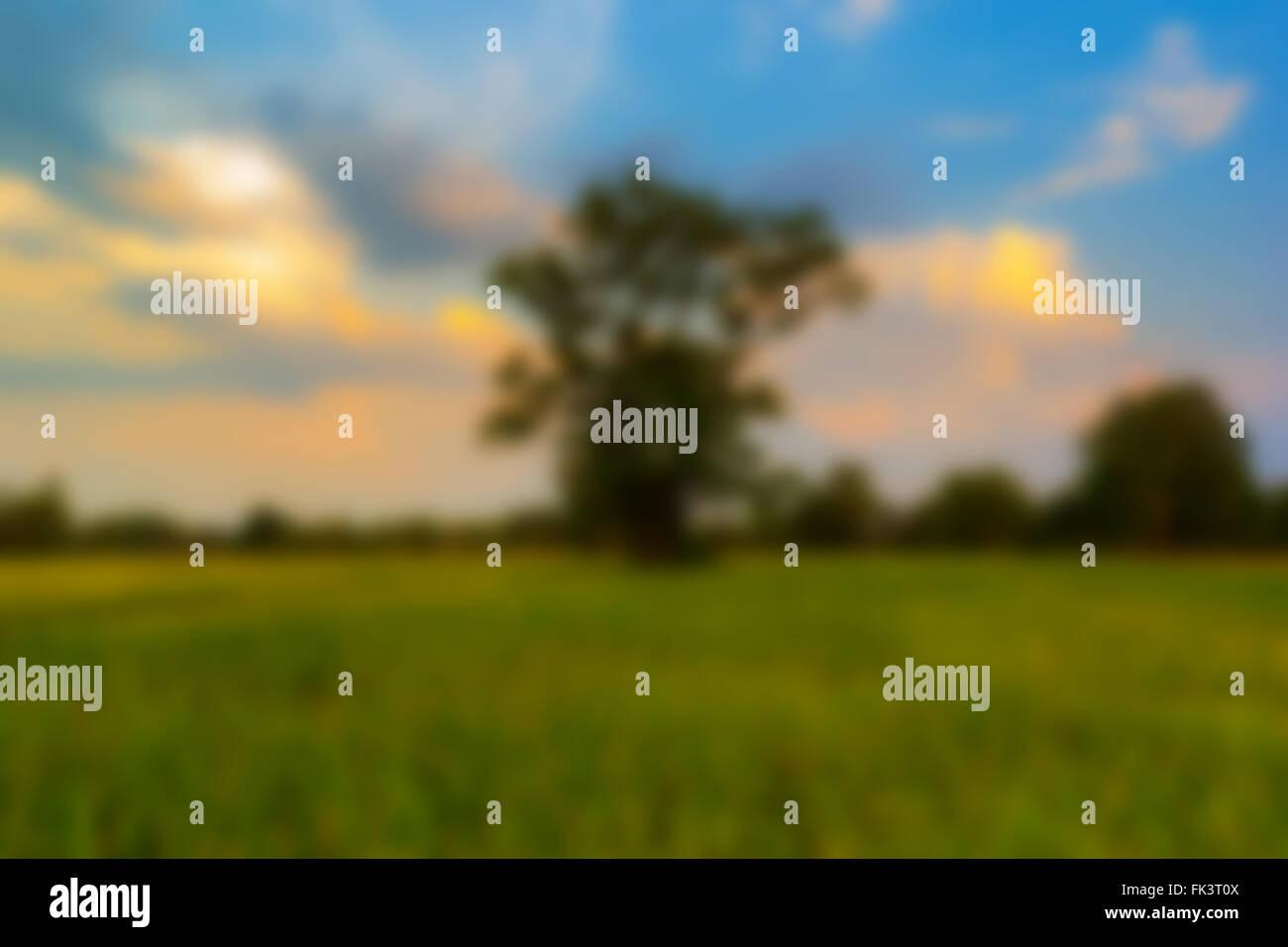 Resumen fondo desenfocado paisaje shot arrozal y solitario árbol ...