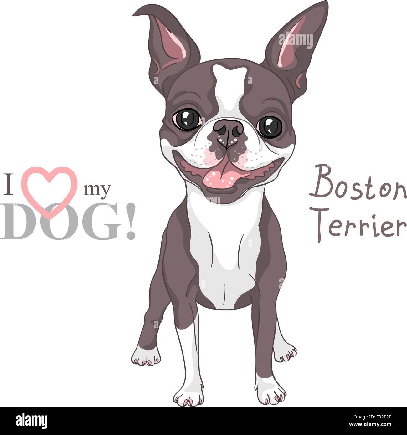 Dibujo Vectorial Boston Terrier raza de perro sonriendo Ilustración ...