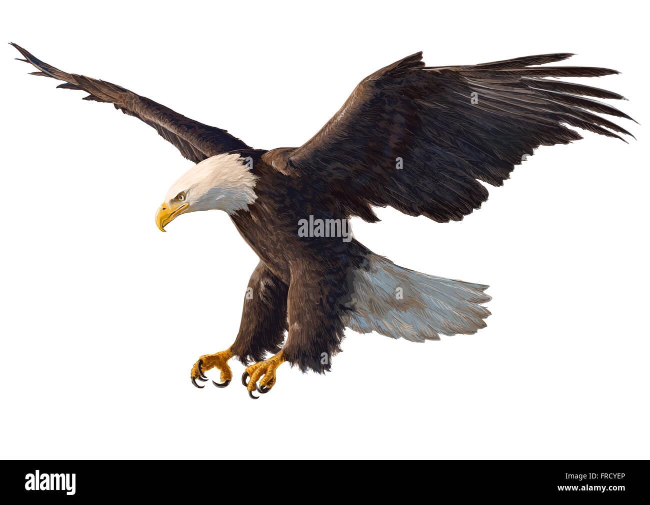 El águila calva swoop mano dibujar y pintar sobre fondo blanco ...