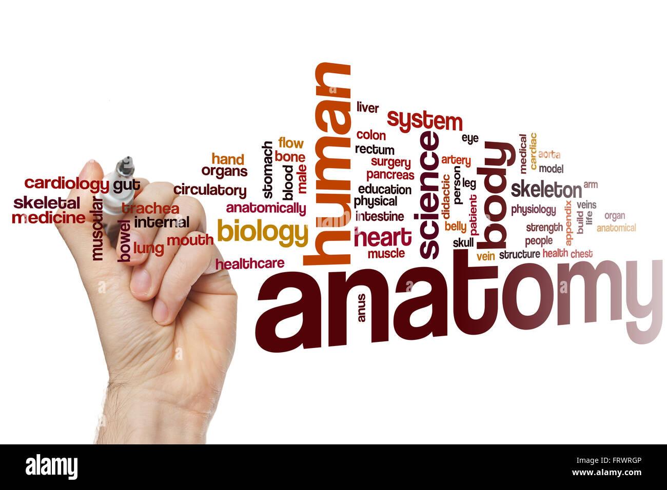 Anatomía concepto palabra nube Foto & Imagen De Stock: 100756230 - Alamy