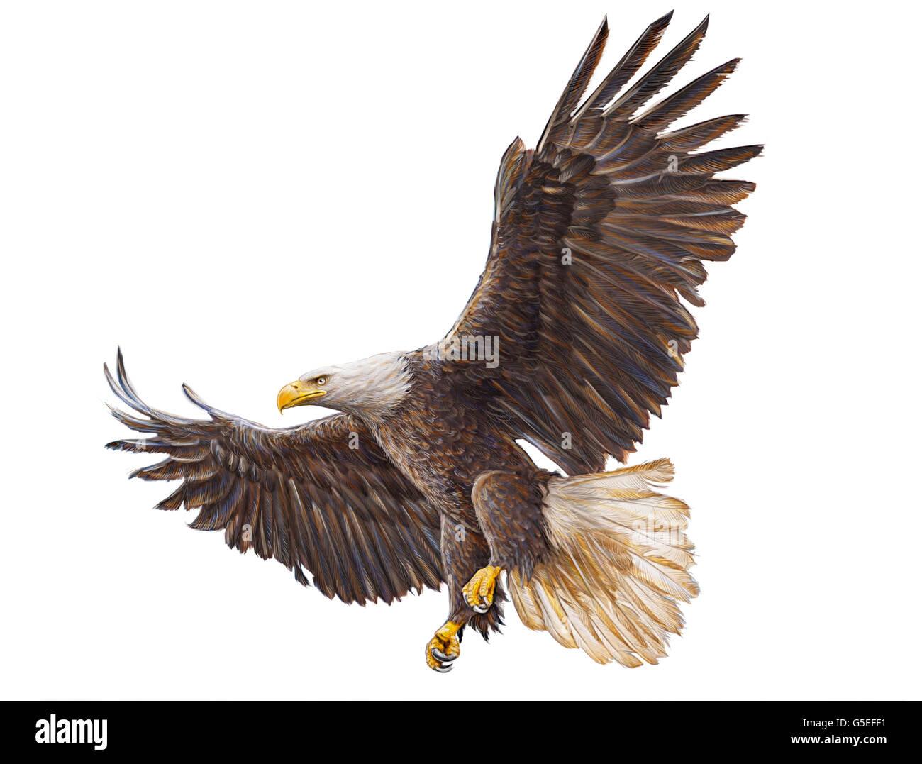 Águila calva mano dibujar y pintar color ilustración sobre fondo ...