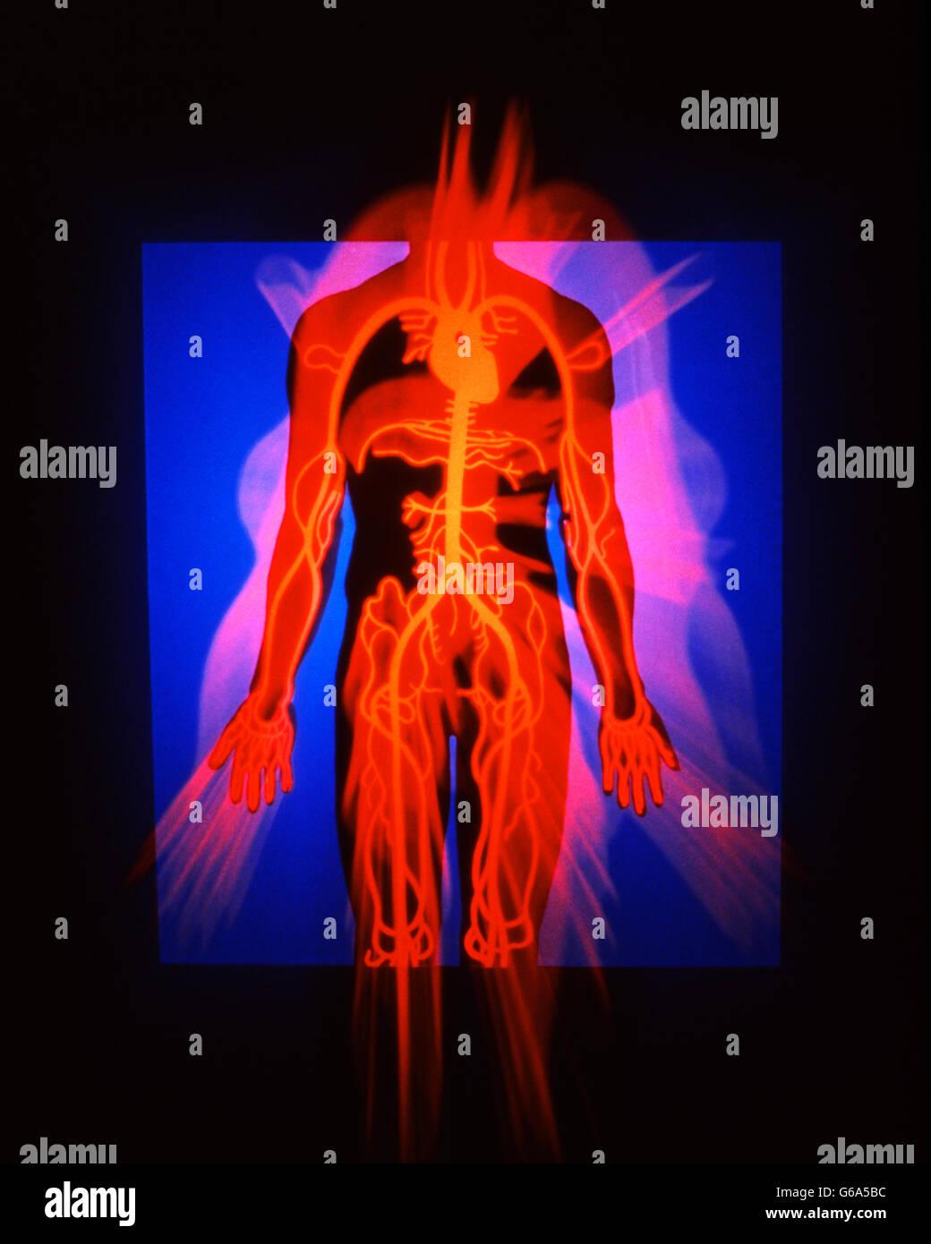 Equipo médico ilustración del cuerpo humano mostrando las venas y ...