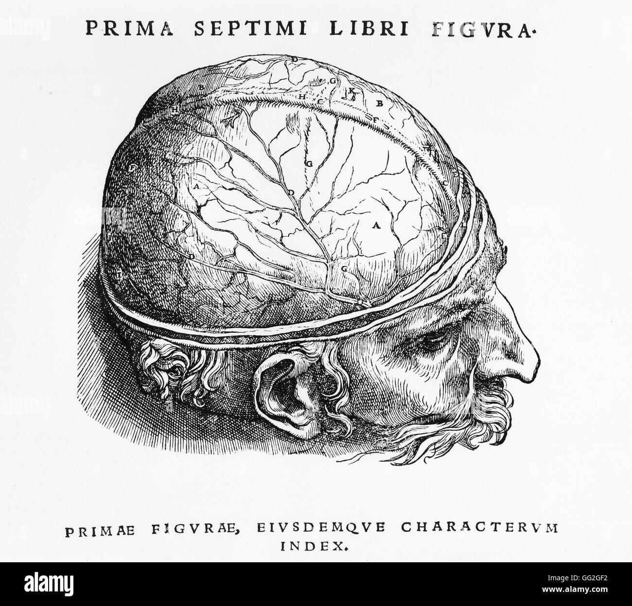 Estudio de disección de la primera capa del cerebro. Grabado en. \'De ...
