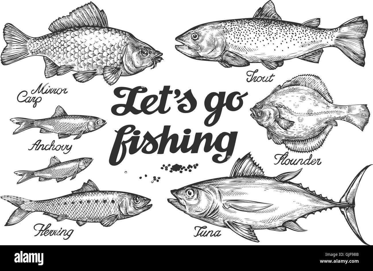 La pesca. Peces vectoriales dibujadas a mano. Boceto trucha, carpa ...