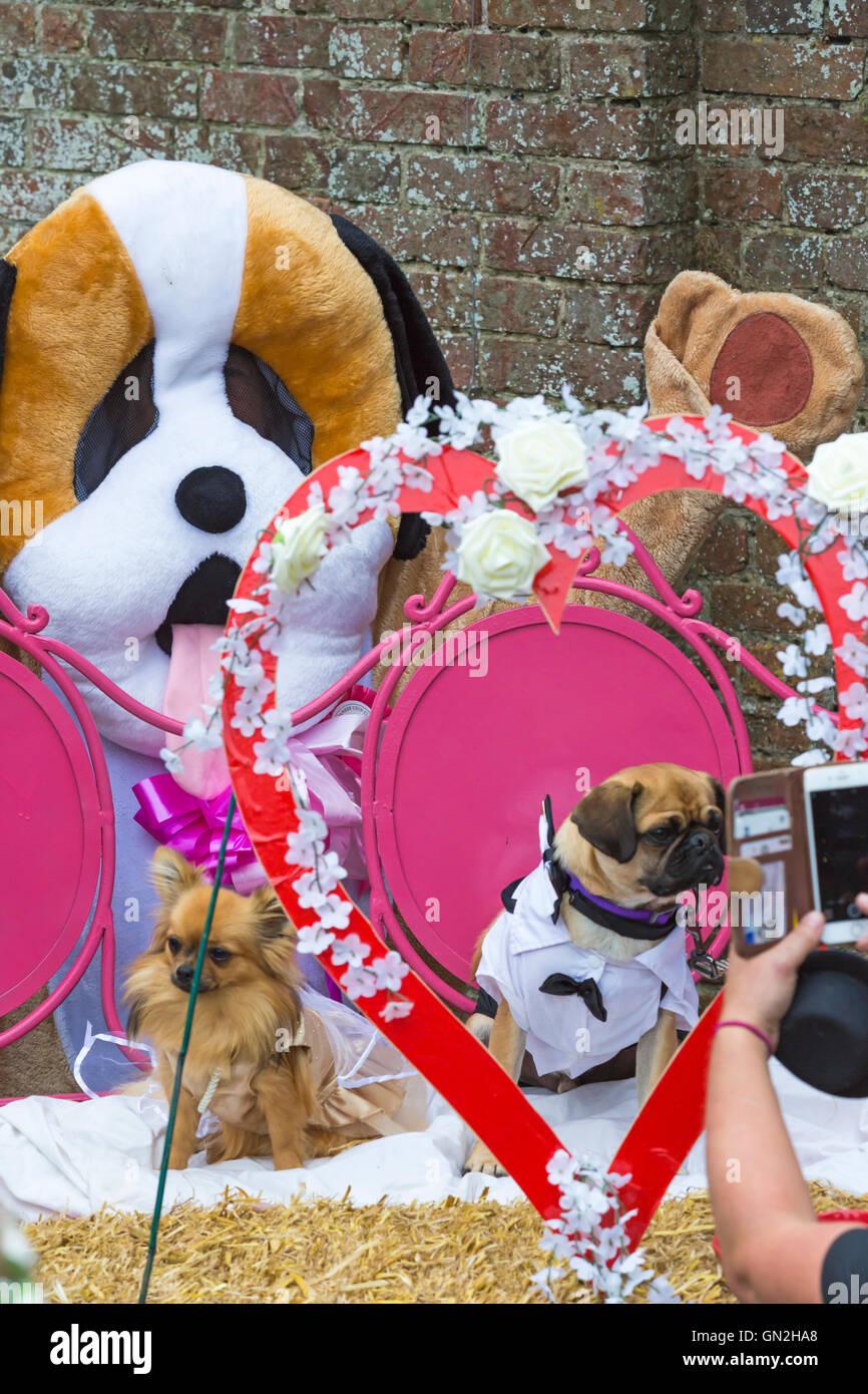 Atractivo Trajes De Boda Del Perro Reino Unido Embellecimiento ...