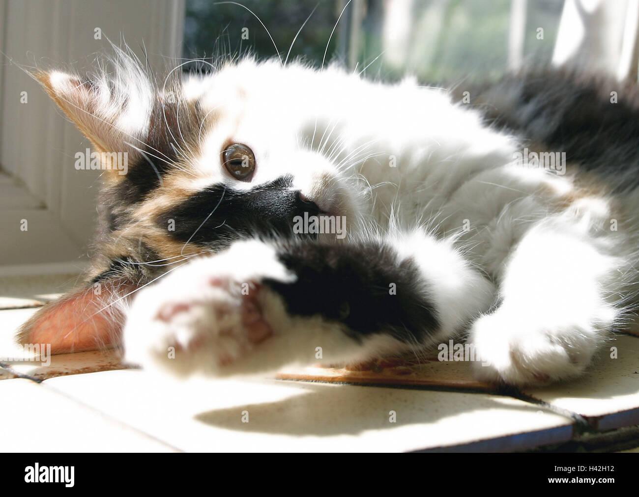 Gato, mentira, tres jóvenes de color, reproducción, detalle ...