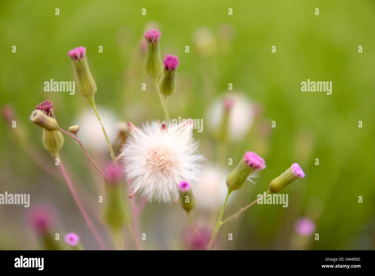 Pequenas Rosas Blancas Flores Silvestres Naturales Fondo Abstracto