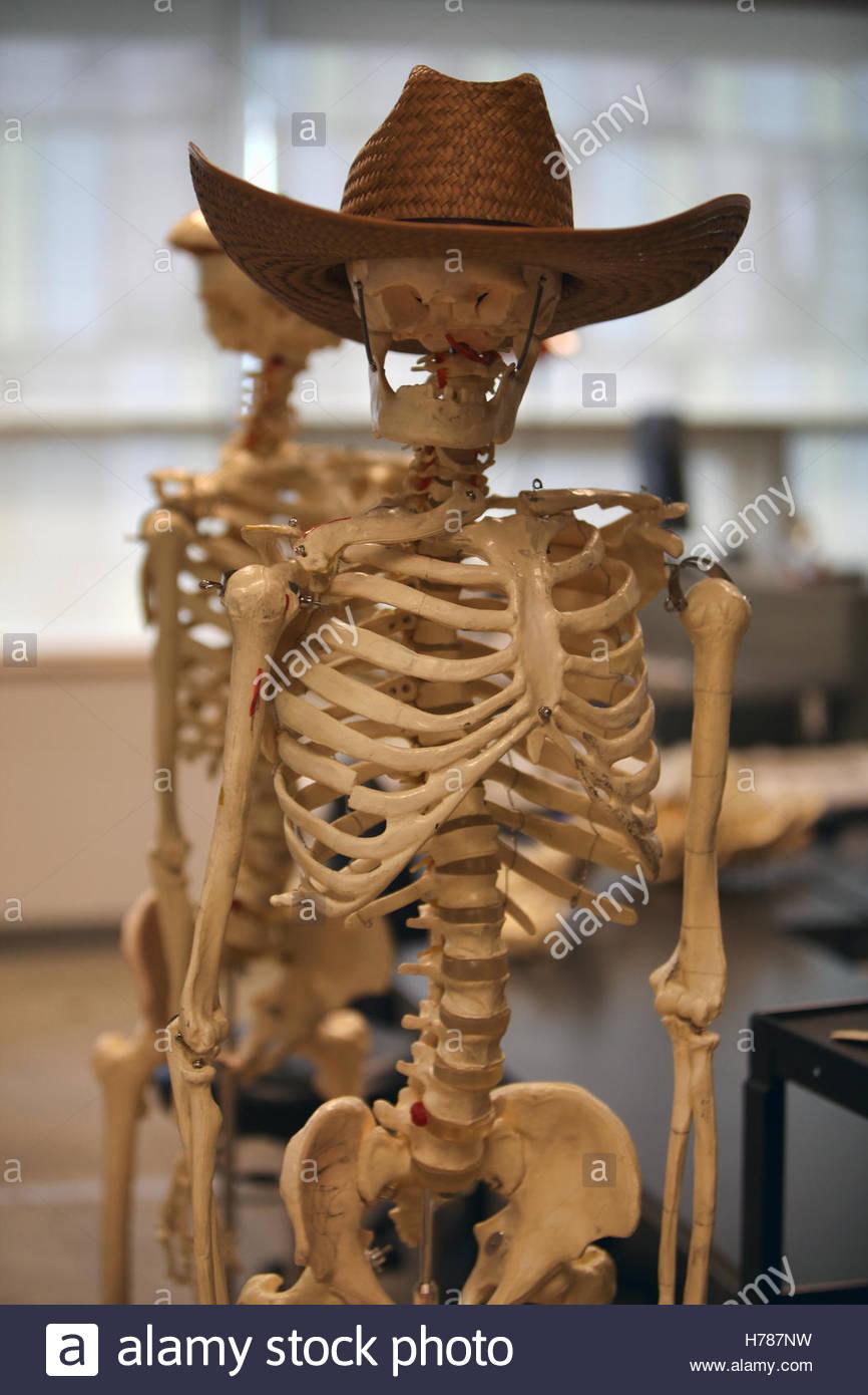 Esqueleto portando un sombrero de vaquero en un aula de anatomía ...
