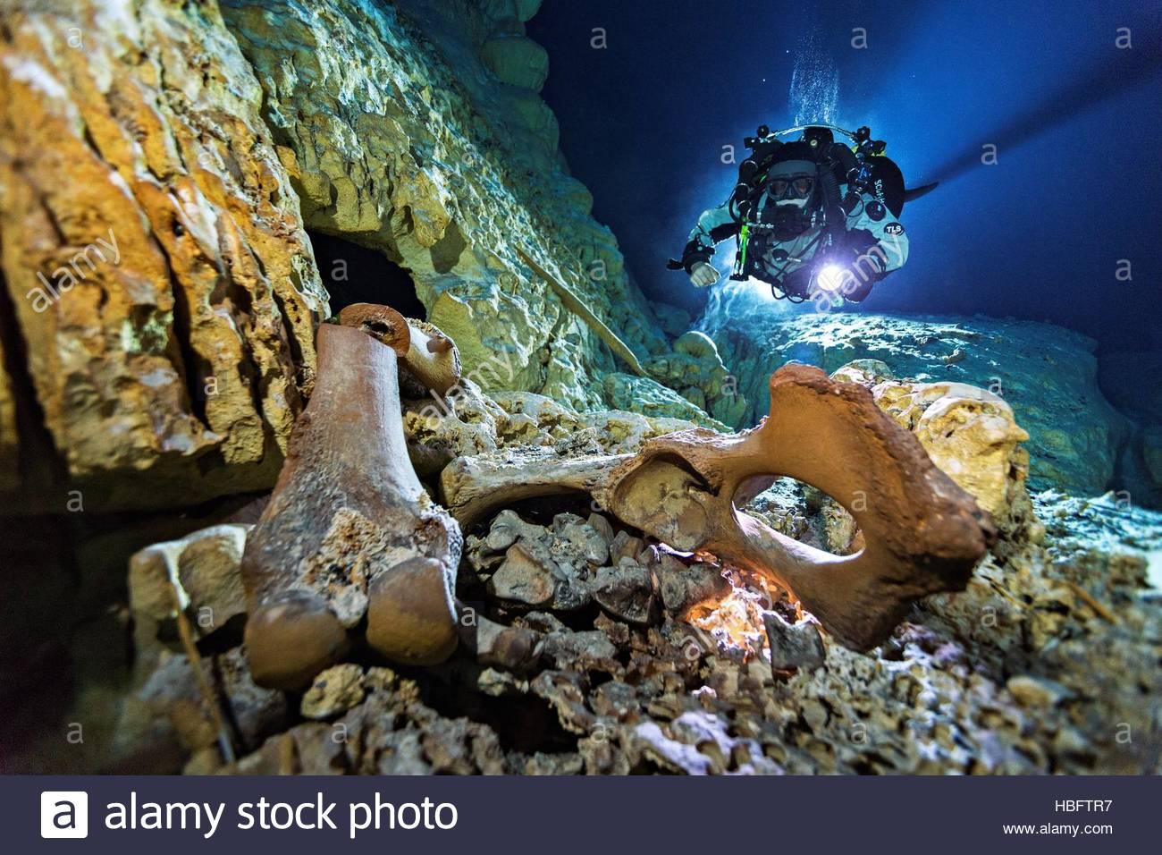 Un buzo y 13.000 años de antigüedad y los huesos del cráneo de un ...