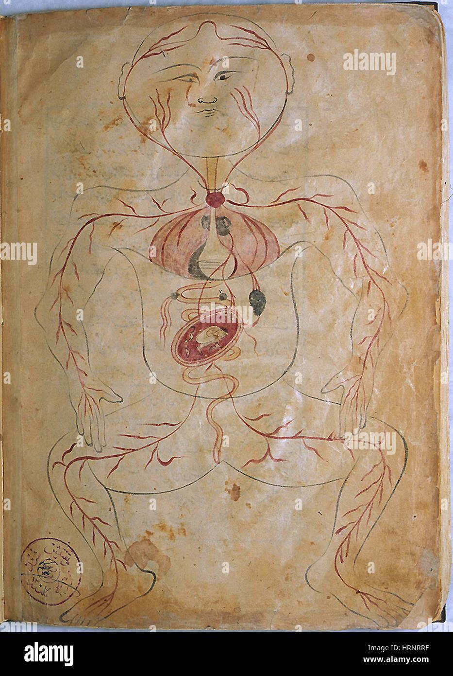 Mansur la anatomía de la mujer embarazada, del siglo XV Foto ...