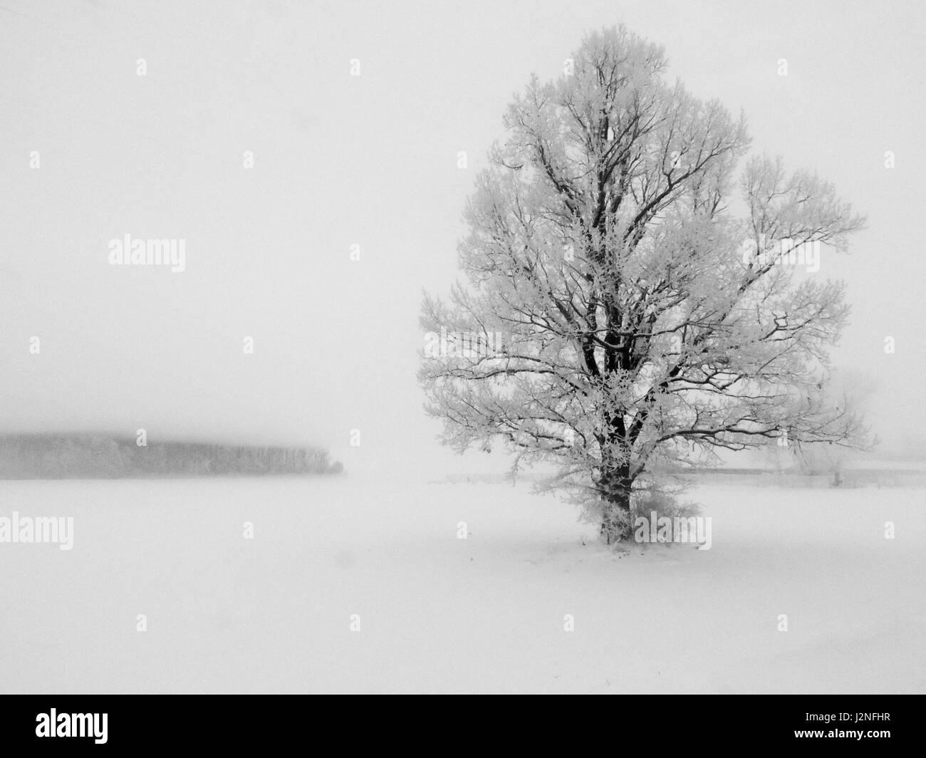 Resumen paisaje invernal con un solitario árbol en el blanco de la ...