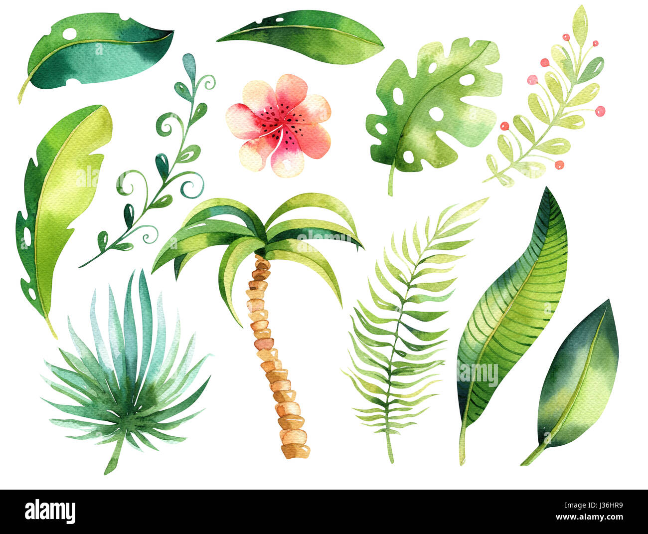 Tropical Ilustración Aislada Acuarela Boho Tropic Papm Hojas De