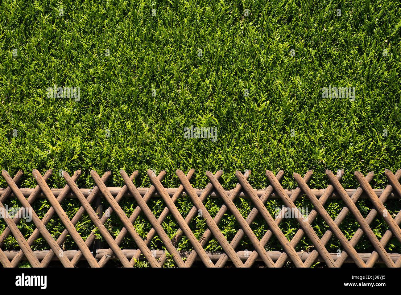 Vista De Un Cerco Rustico De Madera Con Arbustos Verdes Como Segunda - Arbustos-para-vallas