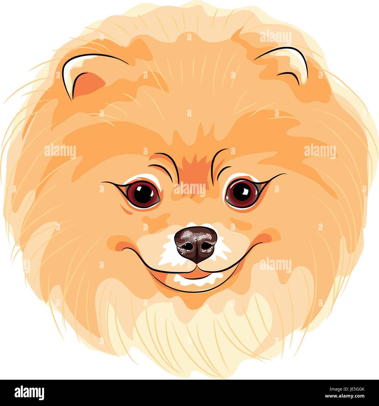Vector lindo perro Pomerania Ilustración del Vector, Imagen ...