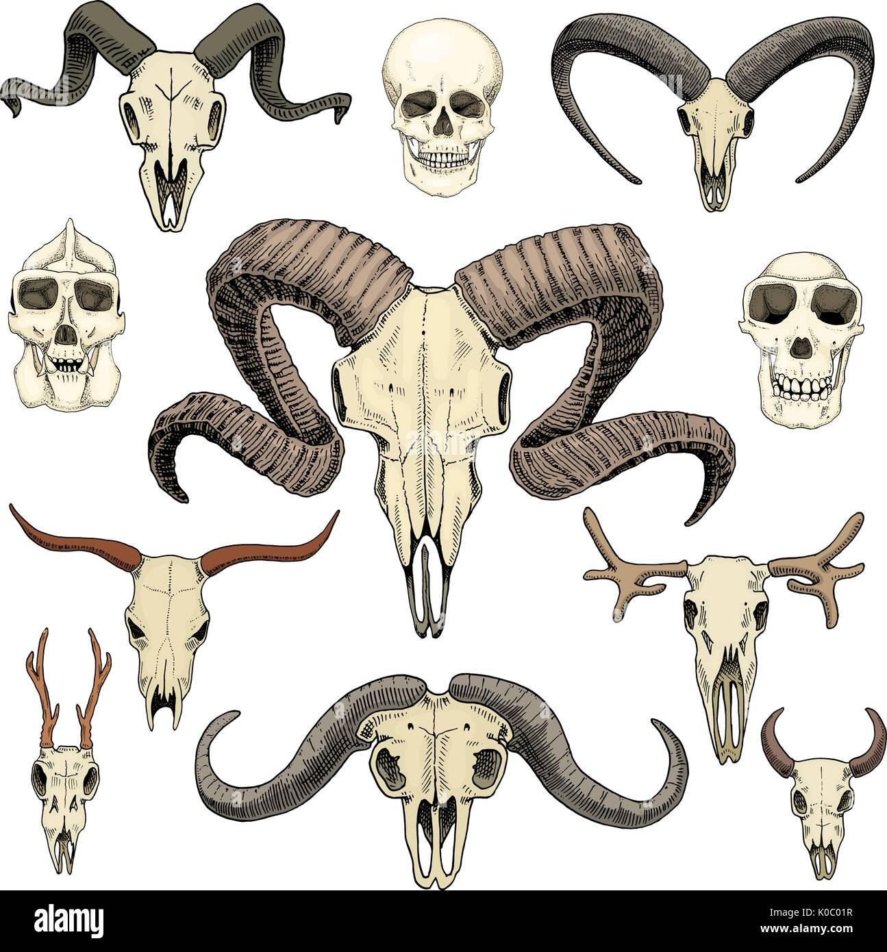 Anatomía ilustración. grabado dibujado a mano en el casco antiguo de ...