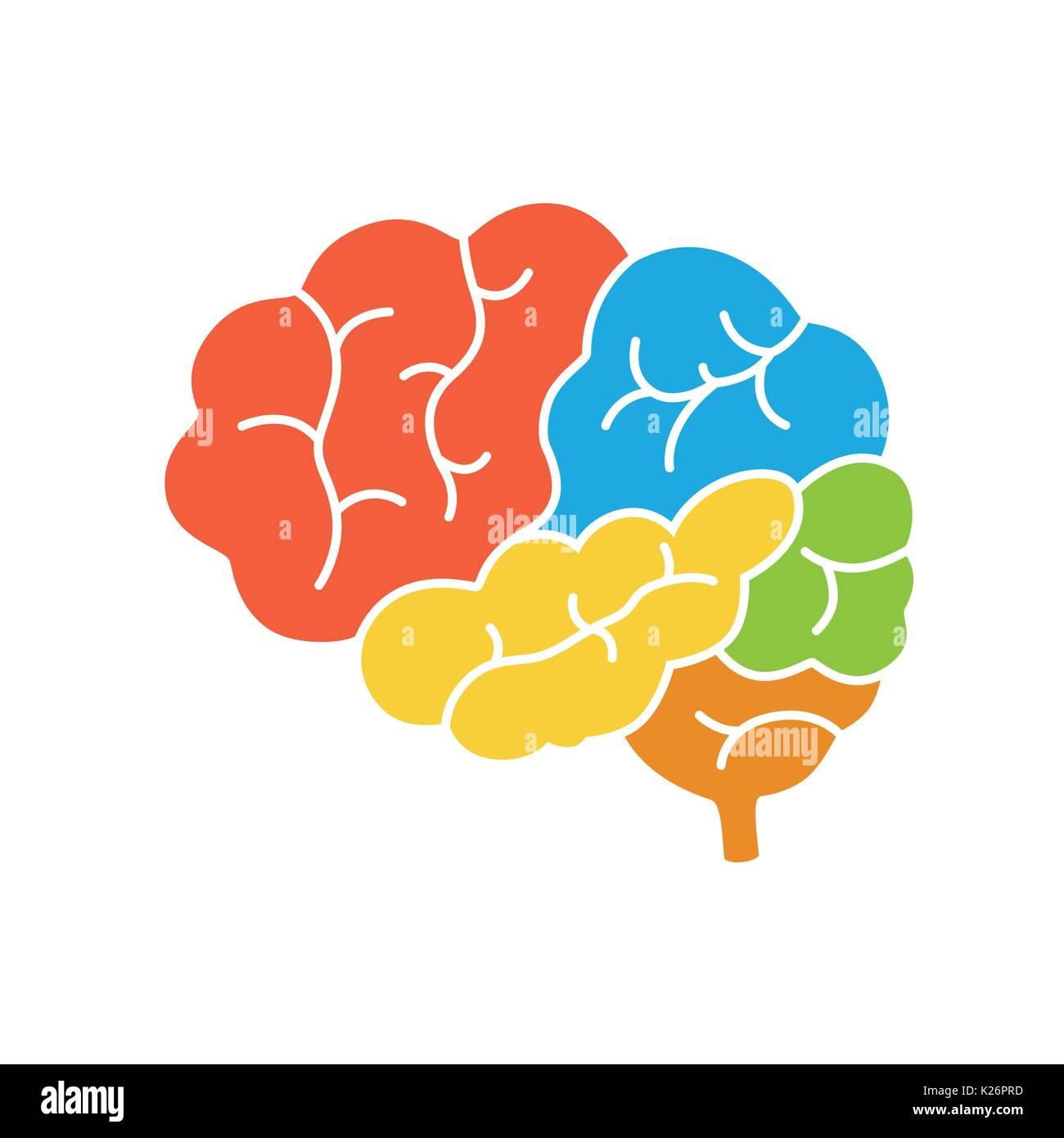 Un diagrama de la vista lateral del cerebro humano, la anatomía ...