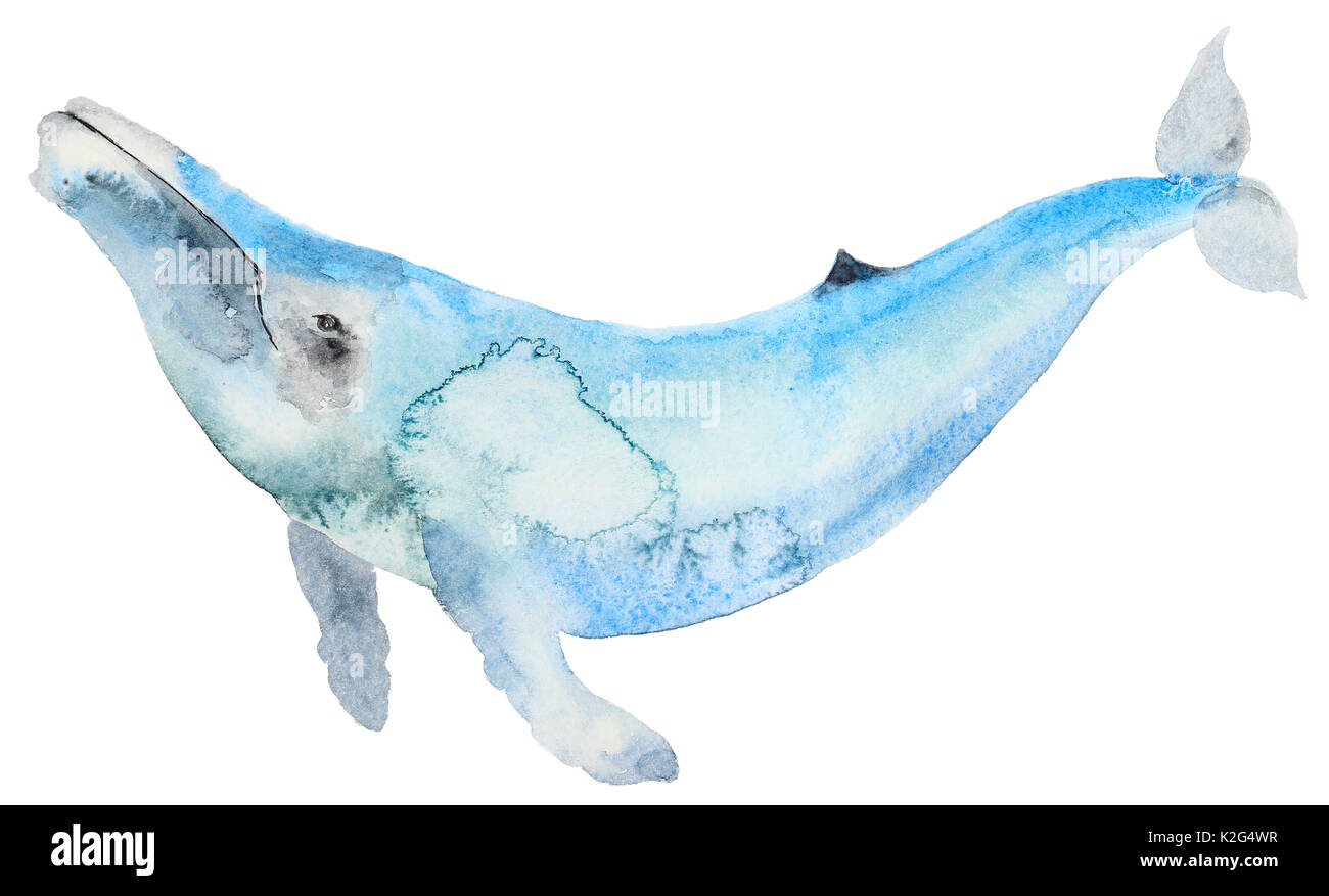 Whale Cartoon Imágenes De Stock & Whale Cartoon Fotos De Stock ...